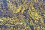 beautiful-pattern-kilkee-crop-01
